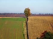 Silesian Beskid, Poland.