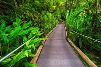 Trail at the Hawaii Tropical Botanical Garden, Hamakua Coast, The Big Island, Hawaii USA.