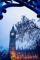 Big Ben, al atardecer con un arbol en primer plano visto a traves de una verja. Parliament, Westminster, Londres, UK, Europa.