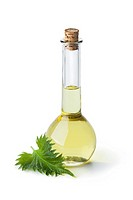 Bottle with shiso leaf oil and fresh leaf on white background.