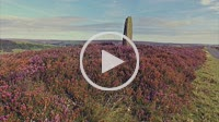 Fryup Dale with flowering heather - North Yorkshire Moor National Park, England
