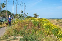 California wildflowers along the San Diego River Path in San Diego, California.
