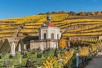 The Belvedere is part of the gardens of the castle Wackerbarth. The baroque castle Wackerbarth is a wine-growing estate in the city district Niederloe...