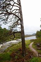 River Dee. Cairngorms National Park. Braemar. Aberdeenshire. Scotland. Europe.