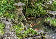Koi pond at the garden of the Hase-dera temple, commonly called the Hase-kannon, one of the Buddhist temples in Kamakura, Kanagawa Prefecture, Japan.