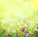 Beauty spring and summer landscape with fresh daisy flowers.