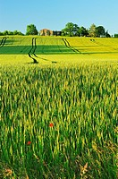 wheat field near St. Colomb-de-Lauzun, Lot-et-Garonne Department, Aquitaine, France.