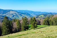 Mountainous landscape in the Upper Münster valley in early spring, Breisgau-Hochschwarzwald, Baden-Württemberg, Germany.