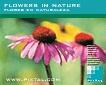 Flores en la naturaleza (CD074)