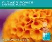 Energía floral (CD170)