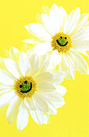 Two daisies with smiley faces