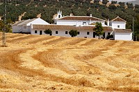 ´Cortijo´ (typical Andalusian farmhouse). Andalusia. Spain