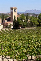 Vineyards and church of Lavern with Montserrat mountains in background, Subirats. Barcelona province, Catalonia, Spain