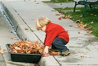 Boy collecting leaves