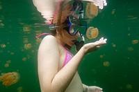 Snorkeller closely observes the stingless jellyfish, Mastigias sp., Jellyfish lake, Palau, Micronesia