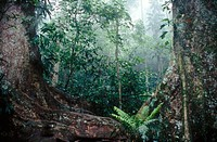 Cloud forest, Henri Pittier National Park, Venezuela