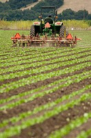 Man driving John Dere tractor through rows of crops in Watsonville, California field.