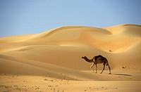 Liwa oasis in the desert. UAE
