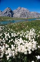 Lac des Cerces. Savoie, France
