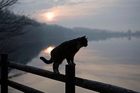 Cat on rail