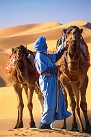 Man and camels in desert, Morocco