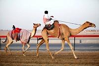 Camel Racing with robots, Dubai, United Arabian Emirates