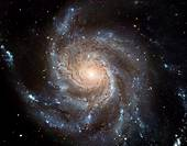 This giant spiral disk of stars, dust and gas is 170,000 light-years across, or nearly twice the diameter of our Milky Way galaxy  M101 is estimated t...