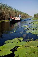 Rumania Delta del Danubio. El delta del Danubio es una zona muy importante desde el punto de vista ecológico; ya que constituye un extenso humedal uti...