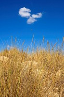 Doñana National Park  Huelva province  Andalucia, Spain