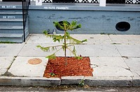 A freshly planted young tree awaits its future in the Upper Ninth Ward after the flooding of Hurricane Katrina  New Orleans, LA  May 5, 2006