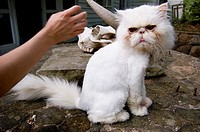 This cat doesn´t look pleased to be pet