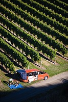 The northern area of the South Island has become a world famous location for wines. Marlborough Vineyards and Brancott are two very known brands. This...