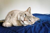 A housecat resting