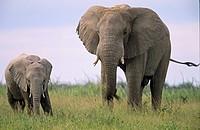 Etosha-Elephants