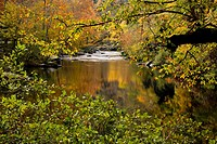Autumn, Tellico River, Cherokee National Forest, TN