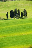 Siena country, Tuscany, Italy