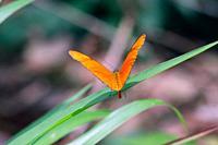 Butterfly, Pedasi, Azuero peninsula, Panama