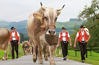 Appenzell, switzerland, people in traditional costume herding cows