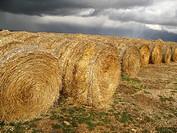 Straw bales, Teruel province, Aragon, Spain