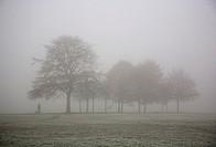 Foggy Clapham Common Tree