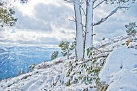 Snowy landscape, Serra de Tramuntana, Majorca, Balearic Islands, Spain