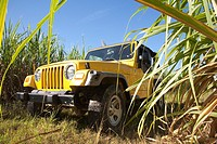 america, caribbean sea, hispaniola island, dominican republic, area of higuey, sugar cane plantation, off-road car