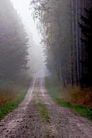 Forest trail in fog - Bavaria/Germany