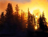 Backlit Trees at Sunrise West Thumb Yellowstone National Park USA