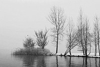 trees at the Lake Maggiore during the winter time