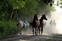 Janów Podlaski Arab Horses Stud. The comeback from the pasture