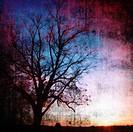 Silhouette of baren tree at sunset