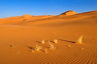 sanddunes of In Tehak, Tadrart, Tassili n´ Ajjer National Park, Unesco World Heritage Site, Algeria, Sahara, North Africa