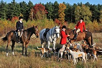 Hunters on horseback with pack of hounds during drag hunting, Belgium