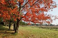 Autumn colors, Leersumse veld, The Netherlands